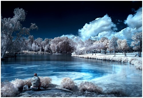 Infrared-Trees-4