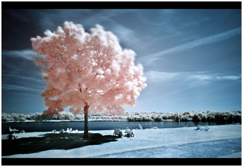 Infrared-Trees-5