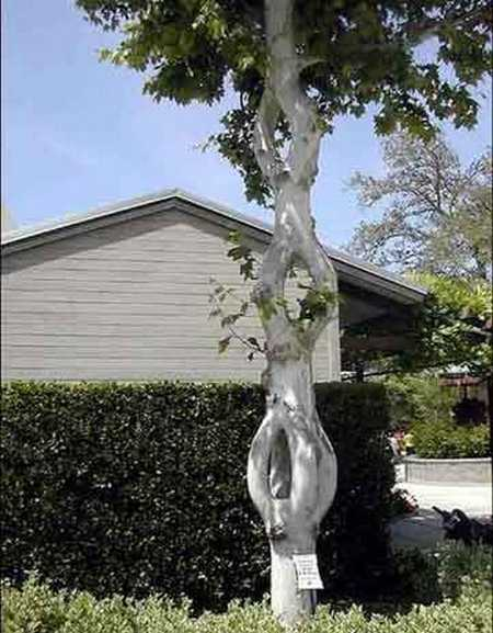 Crazy natural artist