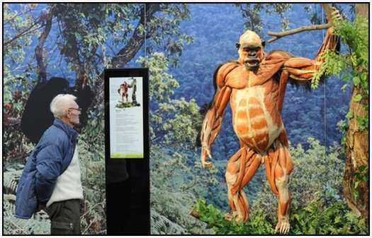 Animal-Body-Worlds-Exhibition-in-Germany-4