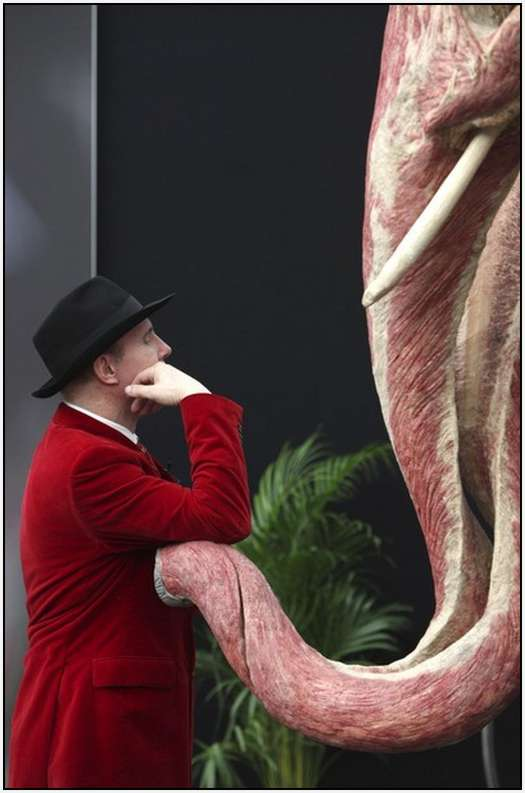 Animal-Body-Worlds-Exhibition-in-Germany-7