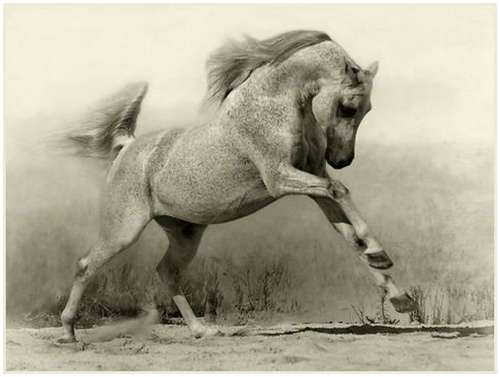 horses wallpapers. Horse Wallpapers