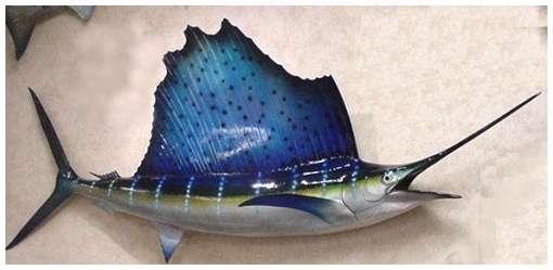 اسرع الحيوانات sailfish.jpg