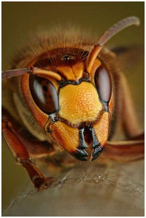 Insects-Of-Our-World-Up-Close-And-Personal-. Wasps are critically important