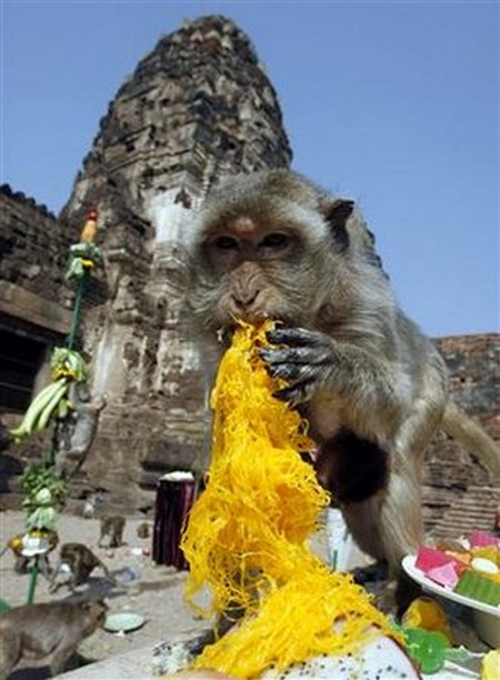 Interesting-Monkey-Festival-in-LopBuri-Thailand-24