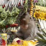 Monkey Festival!!!