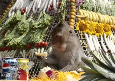 Interesting-Monkey-Festival-in-LopBuri-Thailand-25