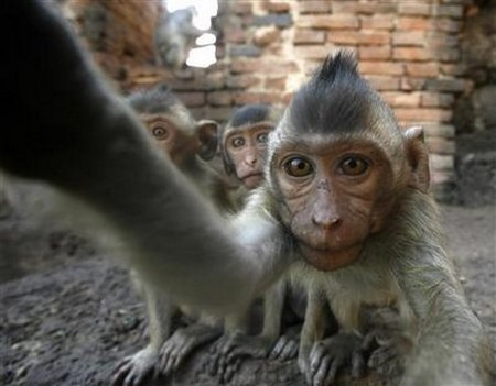 Interesting-Monkey-Festival-in-LopBuri-Thailand-3