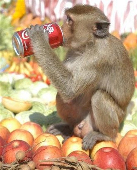 Interesting-Monkey-Festival-in-LopBuri-Thailand-4