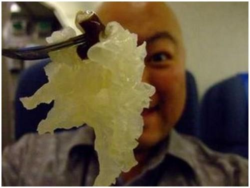 Echizen-Jellyfish-2