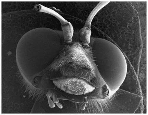 Horror-under-the-microscope-11