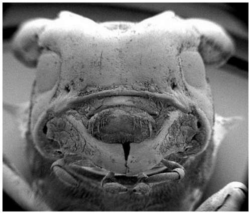 Horror-under-the-microscope-3