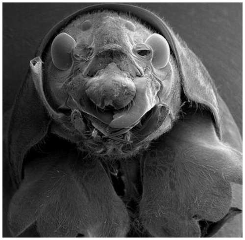 Horror-under-the-microscope-4