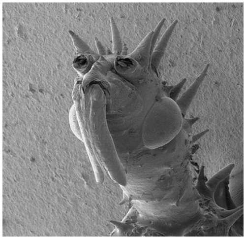 Horror-under-the-microscope-6