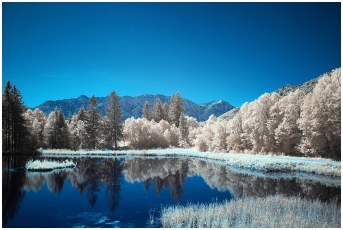 Infrared-Trees-10