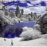 Beautiful Photos of Infrared Trees
