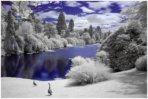 Infrared-Trees-11