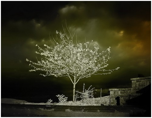 Infrared-Trees-2