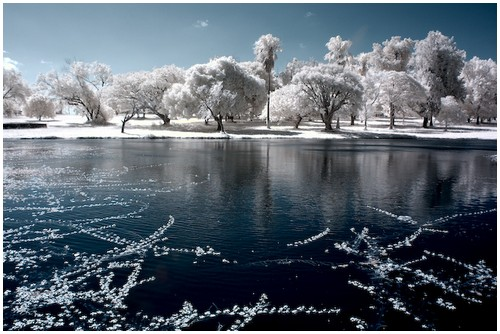 Infrared-Trees-6