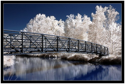 Infrared-Trees-7