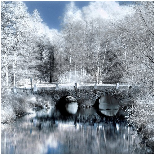 Infrared-Trees-9