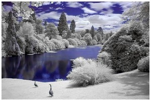 Infrared-Trees
