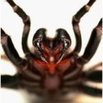 The scariest and weirdest spiders on the planet