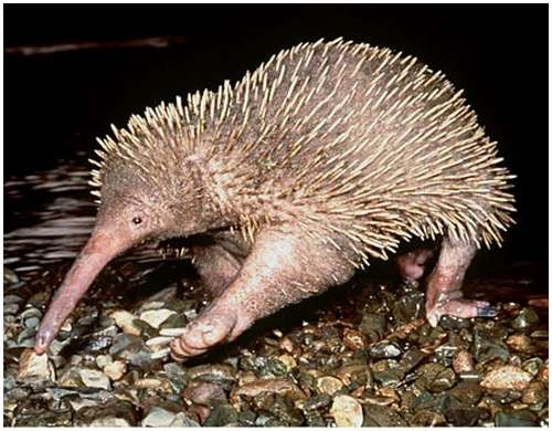 World's-strangest-looking-animals