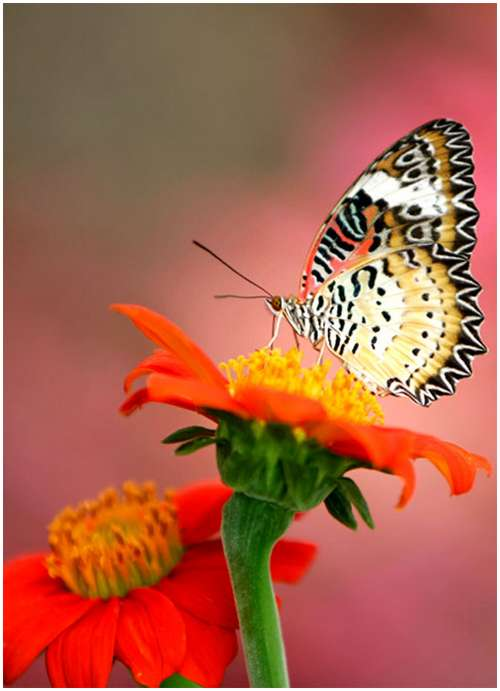 The-Greatest-Butterflies-Photo-Collection-11