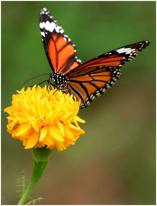 The-Greatest-Butterflies-Photo-Collection-13