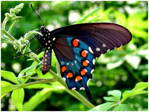 The-Greatest-Butterflies-Photo-Collection-15