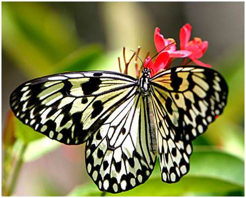 The-Greatest-Butterflies-Photo-Collection-2