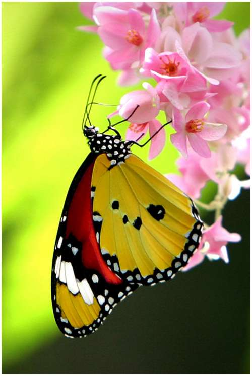 The-Greatest-Butterflies-Photo-Collection-3