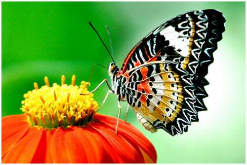 The-Greatest-Butterflies-Photo-Collection-5