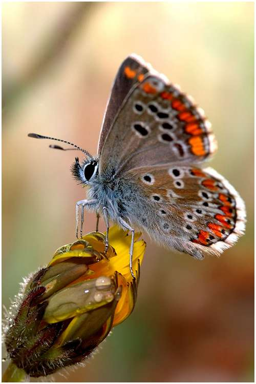 The-Greatest-Butterflies-Photo-Collection-7