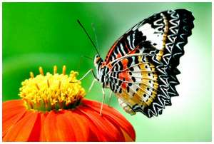 The Greatest Butterflies Photo Collection