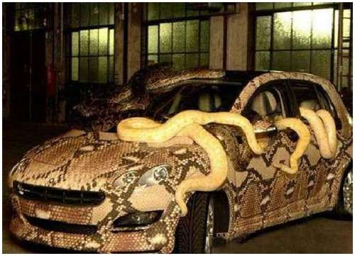 Weird-Snake-Car-1