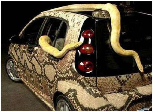 Weird-Snake-Car-4