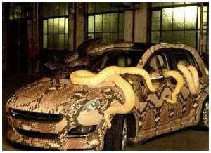 Weird-Snake-Car