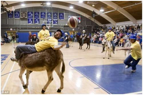 Donkey-Basketball-2