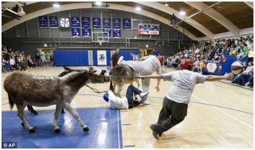Donkey-Basketball-3