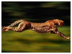 Fastest-animals-in-the-world