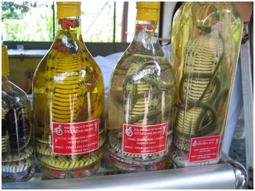 The-famous-snake-wine-10