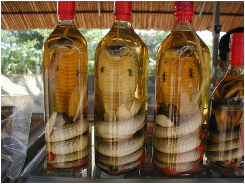 The-famous-snake-wine-3
