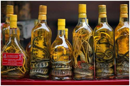 The-famous-snake-wine-7