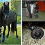 Incredible Animal Prosthetics