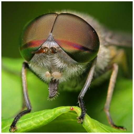 Insects-Of-Our-World-Up-Close-And-Personal-2