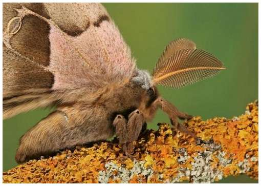 Insects-Of-Our-World-Up-Close-And-Personal/Insects-Of-Our-World-Up-Close-And-Personal-3