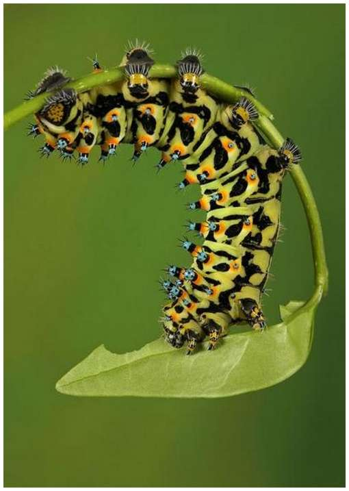 Insects-Of-Our-World-Up-Close-And-Personal/Insects-Of-Our-World-Up-Close-And-Personal-4