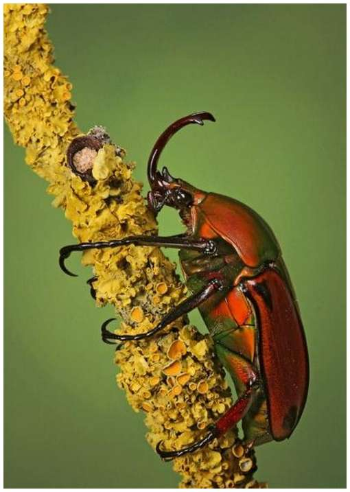 Insects-Of-Our-World-Up-Close-And-Personal/Insects-Of-Our-World-Up-Close-And-Personal-5